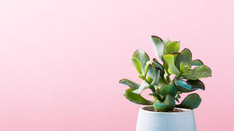 Cleaning Indoor Plants